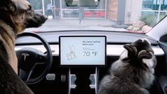 El Tesla Model 3 ya es un 'pet lover'