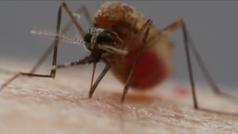 Se investiga en Sevilla un brote de meningitis vírica asociado a mosquitos