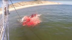 Un tiburón blanco ataca a una foca cerca de una playa de Massachusetts