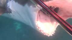 """Un buzo graba el ataque que sufrió de un tiburón blanco: """"Podría haberle metido el puño por la garga"""