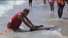Indignación en Roquetas de Mar por la muerte de un pez luna por un hamaquero por espantar su negocio