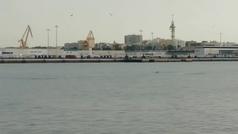 Delfines en el muelle de Cádiz