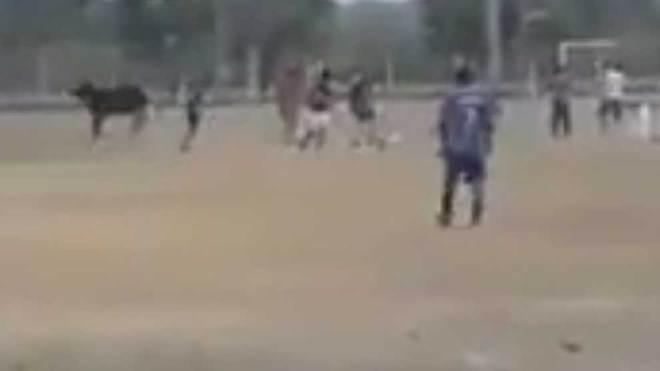 Toro salvaje invade cancha de fútbol y ataca a los espectadores