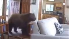 Como un oso por su casa, ¡gracias a Dios que no había nadie!