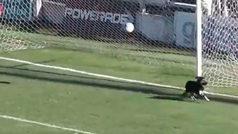 Un perro se convierte en portero en el fútbol argentino