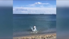 Un surfista rescata a un buitre de morir ahogado en una playa de Cádiz