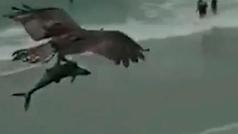 Un águila atrapa con sus garras a un tiburón y se lo lleva volando