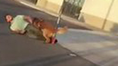 Horrible arresto en EE.UU. entre gritos de terror: un perro policía muerde a un detenido