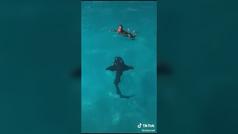 Se tira por un tobogán acuático... y sale un tiburón: para morirse de miedo
