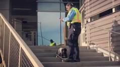 Un guardia de seguridad prohíbe patinar a un perro skater... y no es un 'fake'