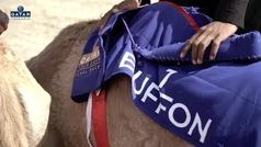 Los jugadores del PSG enloquecen con una carrera de camellos