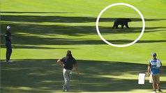 ¿Qué hacer cuándo un oso pardo se cuela en un partido de gol? Mejor no moverse mucho...