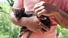 Adopta, por confusión, a un puma yaguarundí