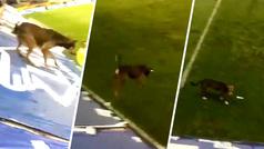 Repudiable acto en La Bombonera: Arrojan a un perro desde ¡los palcos de Boca Juniors!