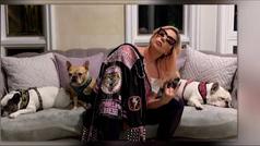 Lady Gaga ofrece una recompensa de 400.000 euros por sus perros