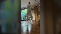Alaphillippe, un campeón del mundo que baila disfrazado de conejo