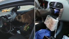 El perro policía capaz de encontrar en segundos...un alijo de billetes en el salpicadero