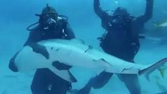 Mike Tyson, que vomitó por los nervios, duerme a un tiburón entre sus brazos en el fondo del mar