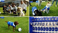 Los jugadores del Real Oviedo visten de azulón... ¡hasta a sus perros!