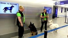 Perros detectan personas con coronavirus en el aeropuerto de Helsinki