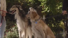 La nueva moda de poner de nombre 'Covid' a las mascotas españolas