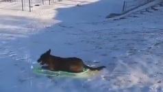 El vídeo viral de un perro en la nieve
