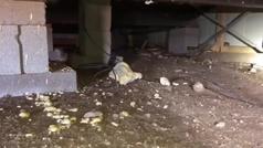 Encuentran 45 serpientes de cascabel debajo de una casa