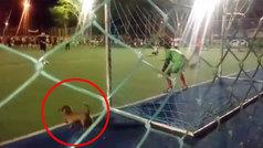 ¡Un perro aparece de repente y se para un penalti en una tanda!