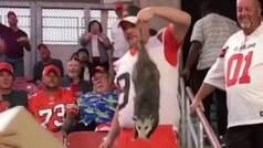 Cazan a una zarigüeya mordedora en pleno partido de la NFL