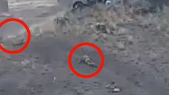 Duras imágenes de los combates en Nagorno Karabaj: soldados azeríes abatidos por tropas armenias