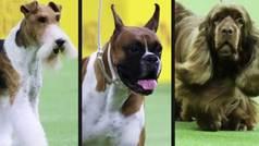 King, Wilma y Bean se coronan como tres de los mejores perros del mundo
