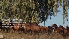 La cuna del caballo lusitano