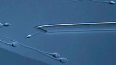 La infertilidad masculina aumenta un 9% en 10 años