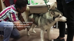 Los perros más guapos de España
