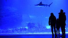 Atlantis Aquarium, el primer acuario interactivo de Europa abre en Madrid