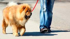 Zamora aprueba un impuesto por tener perro