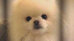 Diseñan un collar para conocer el estado de ánimo de los perros