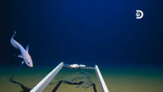 Encuentran basura en lo más profundo de las Fosas Marianas