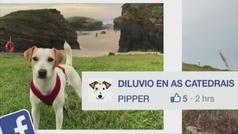 Pipper, el primer perro influencer de España