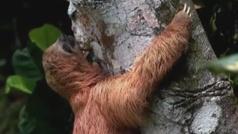 Más de la cuarta parte de las especies están amenazadas