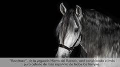 Hierro del Bocado, donde están los caballos de raza española más puros del mundo