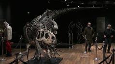 Vendido por tres millones y medio de euros el esqueleto de un dinosaurio