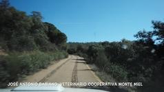 Fuenlabrada de los Montes, el pueblo donde el 90% de la población vive de la miel