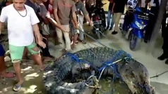 Capturan a un cocodrilo de más de cinco metros por matar a dos personas en Indonesia