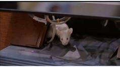 El Congreso se llena de ratas